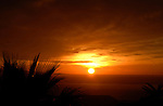Silhouetted palm leaves,early morning light, Tenerife, Canary Islands, Spain