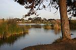 Carlsbad, CA.  Lagoons & birds.