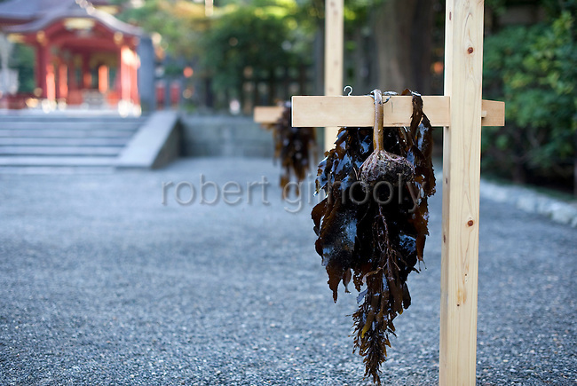 "Seaweed hangs from a stand following a purification ritual known as ""hamaorisai"" at the start of the 3-day Reitaisai festival in Kamakura, Japan on  14 Sept. 2012.  As a symbol of the purification, priests collect the seaweed from the sea and take it back to the shrine, hanging pieces around the shrine grounds to appease the gods. Photographer: Robert Gilhooly"