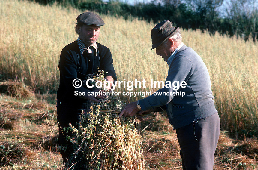 Harvesting corn, oats, the old way, on a farm in Co Donegal, Rep of Ireland. The men are stooking, i.e. propping up the corn sheaves together and tying them with corn stalks. 197809000250b..Copyright Image from Victor Patterson, 54 Dorchester Park, Belfast, United Kingdom, UK...For my Terms and Conditions of Use go to http://www.victorpatterson.com/Victor_Patterson/Terms_%26_Conditions.html