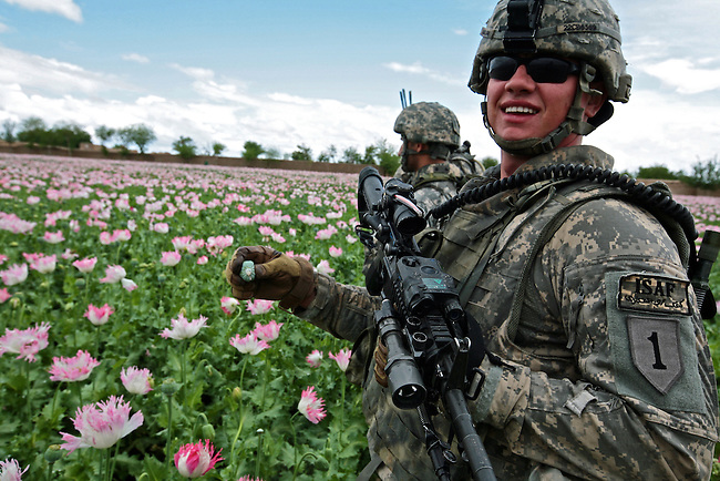Spc. Casey Barlow, 23, of Salem, Oregon, a soldier with Company C, 2nd Battalion, 2nd Infantry Regiment squeezes an opium poppy bulb during a patrol in the village of Mazar'eh in Maiwand district, Kandahar province, Afghanistan. The Taliban are believed to skim at least $100 million a year from the opium trade. NATO officials have struggled for years without success to combat the problem and provide viable alternative crops for local farmers. April 5, 2009. DREW BROWN/STARS AND STRIPES