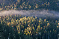 Misty morning fog over the Chugach National Forest, Ester Passage, Prince William Sound, southcentral, Alaska.