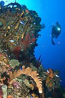 Underwater scenics at Vertigo in Annaly Bay, St. Croix, US Virgin Islands