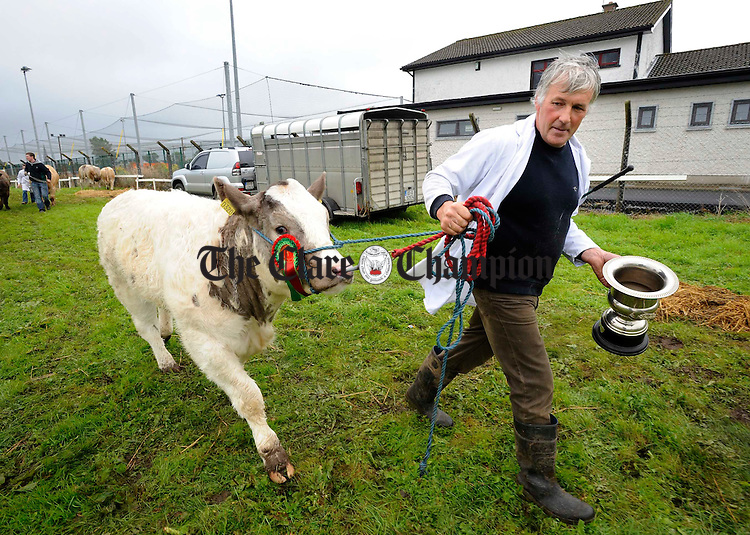 Patrick Killeen, Mullagh leaves with the cup for the calf class at the Clare County Show in Ennis. Photograph by John Kelly.
