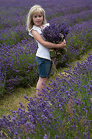 A little girl with her arms full of bunches of freshly cut lavender