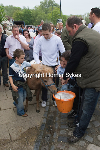 Gypsy annual Horse Fair. Wickham Hampshire UK. Goddard family opening the fair in the traditional manner. Pony drinks from a bucket of beer.