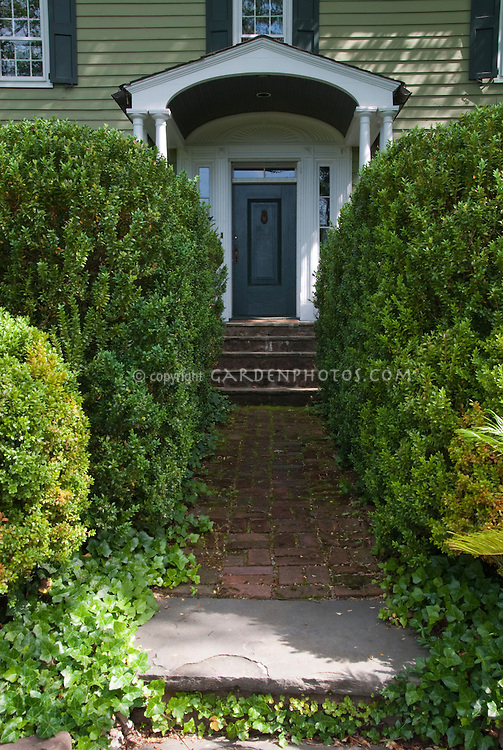 Boxwood and Ivy in shade leading to front door of house home landscape ...