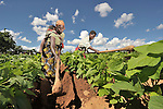 Women farmers in Baula, Malawi, who have benefited from a Presbyterian Church-sponsored Soils, Foods and Healthy Communities Project