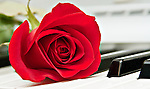 A red rose lays on a keyboard.