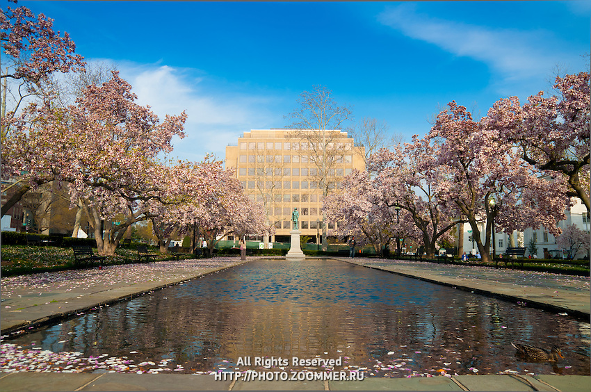 Rawlins Park in Washington DC in spring with trees in cherry blossoms