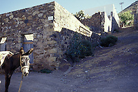 A donkey in the 19th-century silver-mining town of Real de Catorce, San Luis Potosi state, Mexico. Real de Catorce became a virtual ghost town during the early part of the 20th century. It has recently become a popuar destination for travellers.