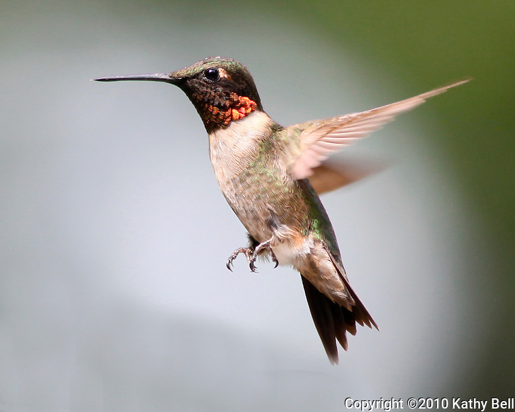 Hummingbirds