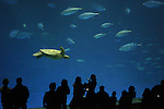 visitors and sea turtle and tuna