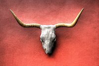 Longhorn skull on Red Stucco wall in Santa Fe, New Mexico
