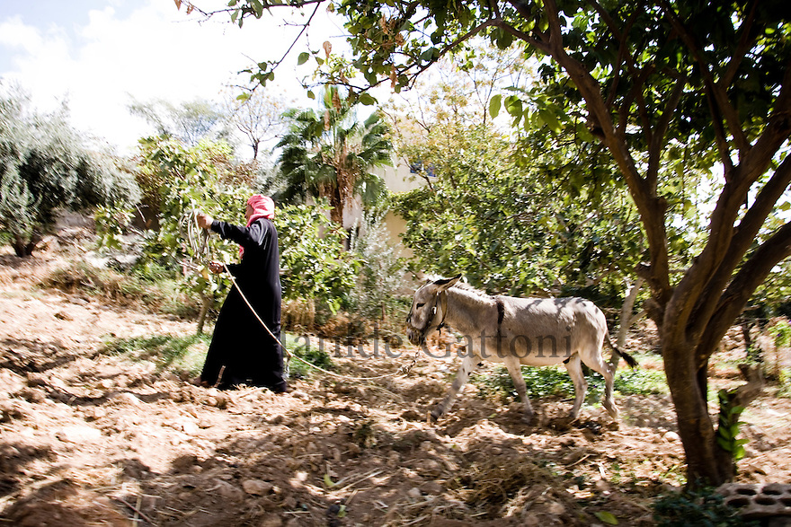 JORDAN - IRAQ AL AMIR - ABOU HISHAM IN HIS FARM. THE FAMILY RECEIVES A WEEKLY DISTRIBUTION FROM A WATER TANKER. 4000 LITRES OF WATER PER WEEK FOR 8 PEOPLE.
