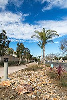 The rocky landscaping along the Harbor Boulevard Cornerstone Bike Trail in Costa Mesa, California under a blue sky with partial clouds.  The rocks flow along the trail like a dry streambed, framed with other plants.  This vertical framing highlights the towering trees, light posts, and gorgeous California sky. The landscape architecture work on the project was done by David Volz Design.