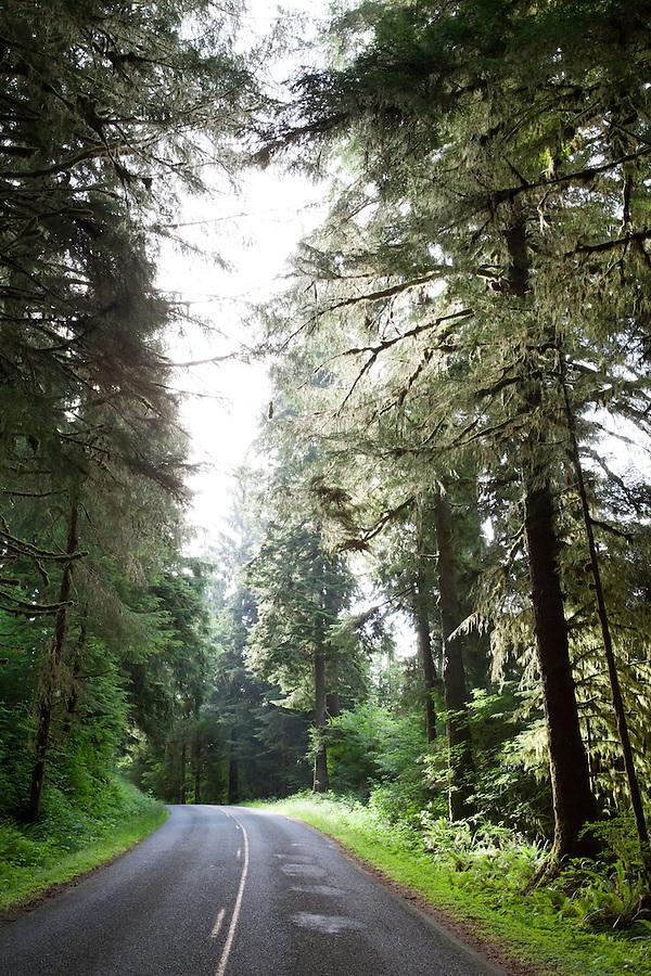 Road in North Cascades National Park, Washington state, WA, USA