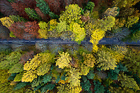 A road travels through a forest with the trees changing colour in Autumn in Kashubia.