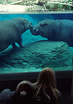 Watching Hippopotamus at San Diego Zoo