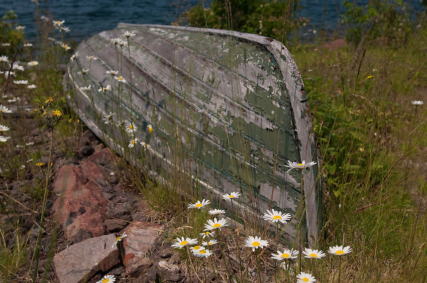 Wildflowers grow around an aging wooden boat at the Edisen Fishery at Isle Royale National Park.