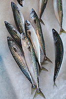 Freshly-caught mackerel fish on sale at food market at La Reole in Bordeaux region of France