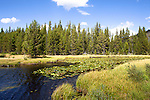 Stream that feeds Shoshone Lake in Yellowstone National Park.