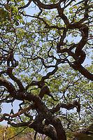 Tropical Nature: Savanna cerrado biome, grassland, woodland, saxicolous ecosystems; trees, flowers