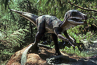 Pre-historic Animals: Deinonychus--early Cretaceous--135-100 Million years ago. Ht., 5 feet; Length, 10 ft.; wt., 175 lbs. (?)  Many predator weapons. Could have run 30 miles/hr.