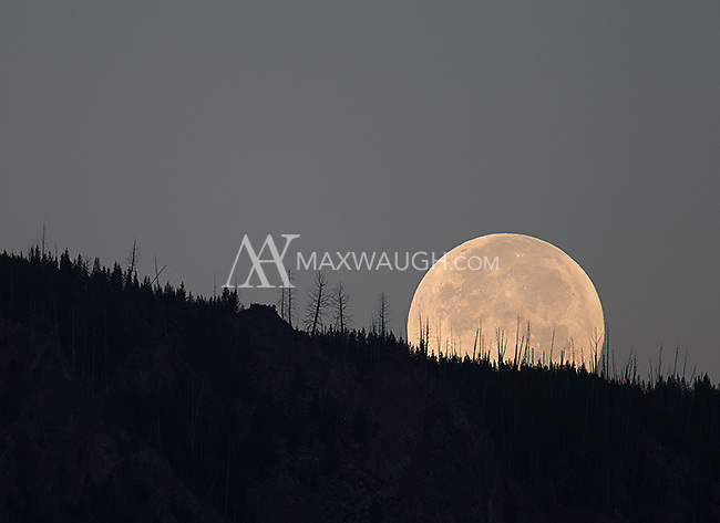 """The """"super moon"""" sets on Yellowstone."""