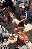 Rantepao, Tana Toraja, Sulawesi, Indonesia, October 2010. Men deal in in fightingroosters for the cockfights Market day in Rantepao.  The Toraja people live a traditional life in the forested mountains of South Sulawesi.  Photo by Frits Meyst/Adventure4ever.com