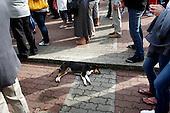 LOMZA, POLAND, JUNE 15, 2010:.Jaroslaw Kaczynski on the campaign trail:.Dog sleeping during rally on the main square Lomza, north east Poland. .(Photo by Piotr Malecki / Napo Images)..LOMZA, 15/06/2010:.Pies spi podczas spotkania wyborczego..Jaroslaw Kaczynski. Spotkanie z wyborcami..Fot: Piotr Malecki / Napo Images.