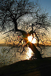 Sunset Tree on Lake Coeur d' Alene, Idaho