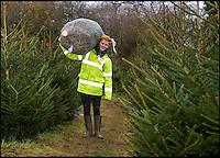 Schoolboy sells Xmas trees to pay Uni fees.