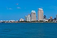 Seagull, San Diego, CA,  from Coronado Island, Ferry Landing, Boat Dock