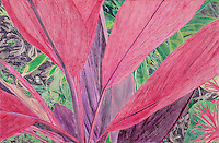 Cerise Leafed Plant. Ankobra River. (Axim, Western GH.) Continental Drift. <br />