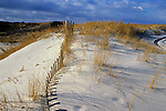 Beach Scene / Sand Dune