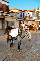 Pack Ponies on Hydra,  Greek Saronic Islands.