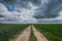 Road through farm fields, Grabine - Grabina, Prudnik County, Opole Voivodship, Silesia, Poland