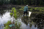 John Romansic hunts for newts in the upper reaches of a Santiam Pass pond as a light snow begins to fall. As a zoology  major at Oregon State University in Corvallis, Oregon, he is researching a population decline of newts in this region.