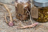 Gewöhnliche Nachtkerze, Tinktur, alkoholischer Auszug aus Wurzel und Öl, Nachtkerzen-Öl, Nachtkerzenöl, Nachtkerzen-Wurzelöl, Nachtkerzen-Tinktur, Wurzeln, Nachtkerze-Wurzel, Nachtkerze-Wurzeln, Nachtkerzen-Wurzel, Nachtkerzen-Wurzeln, Wurzelstock, Pfahlwurzel, Oenothera biennis, Common Evening Primrose, Evening-Primrose, Evening star, Sun drop, Root, roots, root-stock, taproot, Onagre, L'Onagre bisannuelle