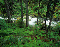 Nickel Creek cascading through a forest, Mt. Rainier National Park, Washington, USA.