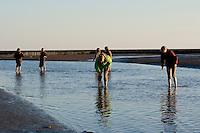 Kinder, Kind keschert in einem Priel im Wattenmeer, Watt, Abendstimmung, Niedrigwasser, Ebbe