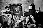 Puppy Farming Wales 1989. A RSPCA inspector visits a farmers home where she breeds Pomeranians and Chihuahuas.