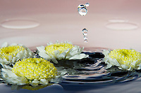 Water drops falling into water with yellow and white flowers and pinkish background