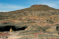 A sea lion finds shelter on an island called Chinese Hat in the Galápagos islands. Chinese Hat (Sombrero Chino) is a little island off the southeastern tip of Santiago that from a distance has the shape of a Chinese hat. It is a fairly recent volcanic cone, which accounts for its unusual shape.
