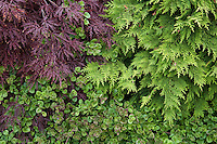 Foliage garden leaf tapestry with Acer palmatum  'Red Select' on top left