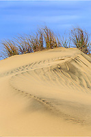 Jockey' s Ridge is the tallest natural sand dune system in the Eastern United States. Located in Nags Head, it is one of the most significant landmarks on the Outer Banks, North Carolina.