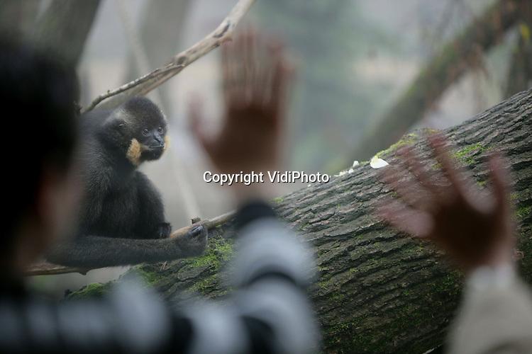 Foto: VidiPhoto..ARNHEM - Burgers' Zoo in Arnhem heeft in het nieuwe onderdeel Rimba overal glasverwarming aangebracht, zodat bezoekers geen last hebben van condens op de ramen bij de verblijven van de dieren tijdens koude en mistige dagen. Dinsdag werd de verwarming voor het eerst succesvol getest. Neveneffect is wel dat bezoekers en soms ook de dieren, hun handen komen warmen aan het glas.