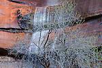 Waterfall near the Virgin River, Zion National Park, Utah, USA