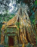 Strangler Figs Overtaking Ruins Built in 1186 at Ta Prohm, Angkor Watt Archeological Park, Cambodia